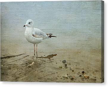 Gull Canvas Print by Theresa Tahara