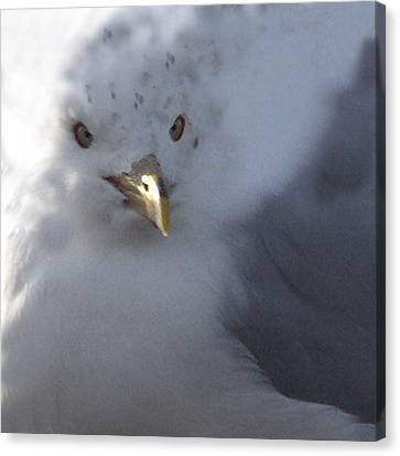 Gull Canvas Print by Tom Romeo