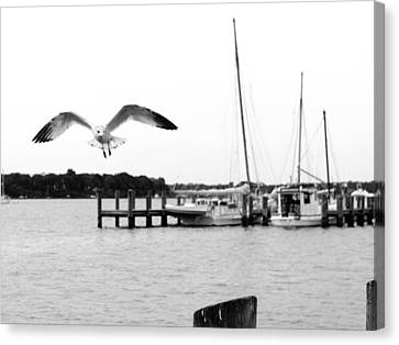 Gull Wing Canvas Print by Harold Piskiel