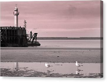 Gulled 4 Canvas Print by Jez C Self