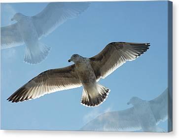 Gulls 41 Canvas Print by Joyce StJames