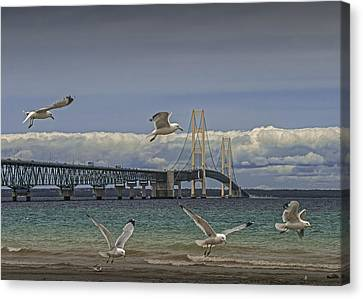 Gulls Flying By The Bridge At The Straits Of Mackinac Canvas Print by Randall Nyhof