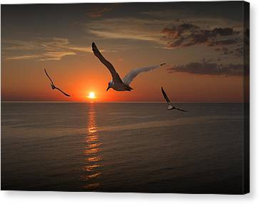 Gulls Flying Towards The Sun Canvas Print by Randall Nyhof