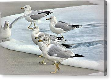 Gulls In The Surf Canvas Print by Rosanne Jordan