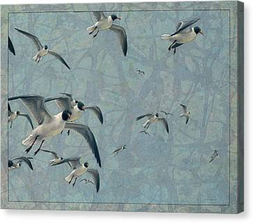 Flying Seagull Canvas Print - Gulls by James W Johnson