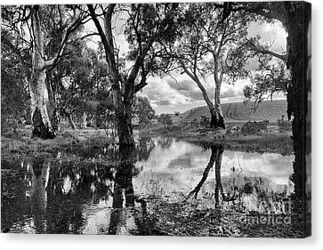 Canvas Print featuring the photograph Gum Creek by Douglas Barnard