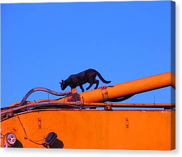 Gunther Gets On Top Of Things Canvas Print by Anita Dale Livaditis