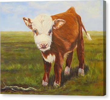 Gus, Cow Canvas Print