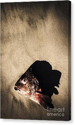 Gut Canvas Print - Gutted by Jorgo Photography - Wall Art Gallery