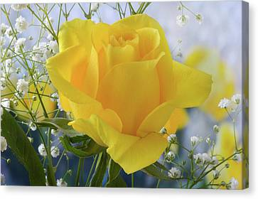 Canvas Print featuring the photograph Gypsophila And The Rose. by Terence Davis