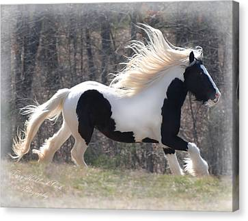 Gypsy Stallion Esperanzo Canvas Print by Terry Kirkland Cook