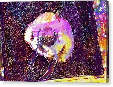 Gyr Falcon Baby Falcon Bird Chick  Canvas Print