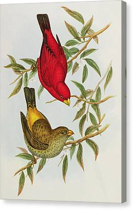Haematospiza Sipahi Canvas Print by John Gould