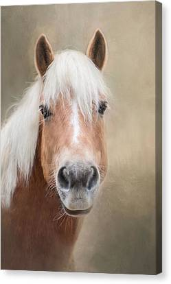 Canvas Print featuring the photograph Haflinger by Robin-Lee Vieira