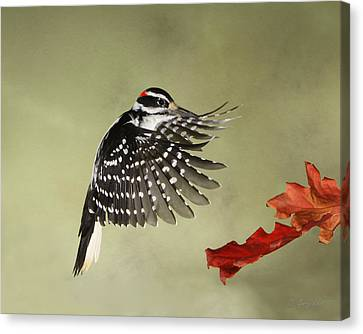 Hairy And The Pin Oaks Canvas Print by Gerry Sibell