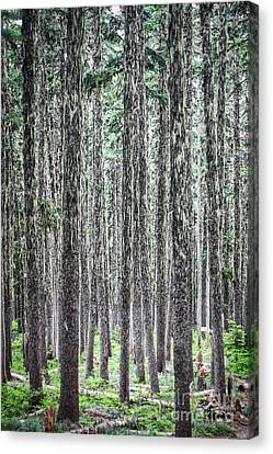 Hairy Forest Canvas Print