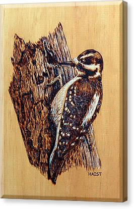 Hairy Woodpecker Canvas Print by Ron Haist