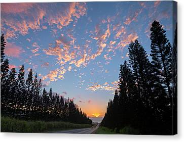 Haleiwa Pines Canvas Print