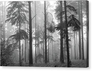 Canvas Print featuring the photograph Half Century by Mary Amerman