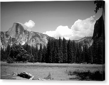 Half Dome Yosemite From The Meadow B And W Canvas Print
