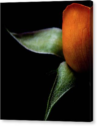 Half Of A Rose Canvas Print by Julie Palencia