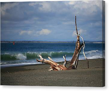 Halfmoon Bay Driftwood Canvas Print by Mike Coverdale