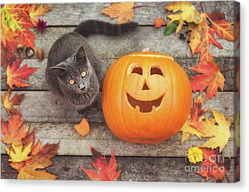 Halloween Cat Canvas Print by Gelner Tivadar