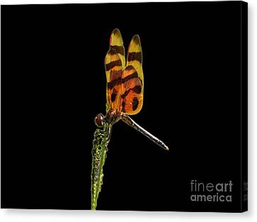 Canvas Print featuring the photograph Halloween Pennant Dragonfly .png by Al Powell Photography USA
