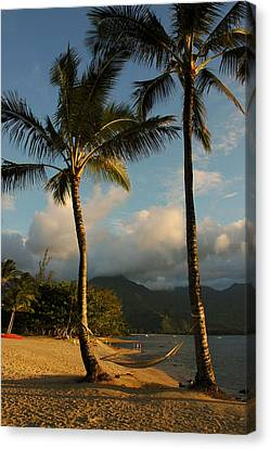 Hammock Between Palms Canvas Print by Stephen  Vecchiotti