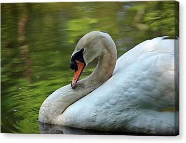Hammy Swan Canvas Print