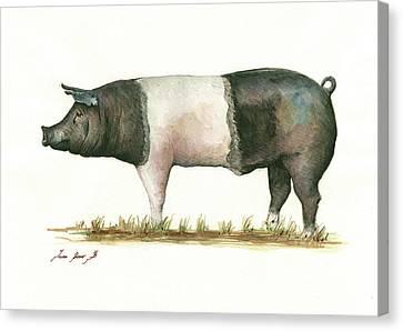 Swine Canvas Print - Hampshire Pig by Juan Bosco