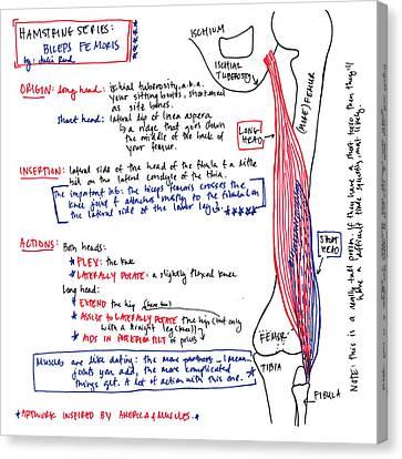 Hamstring Series Biceps Femoris Canvas Print
