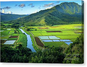 Lush Colors Canvas Print - Hanalei Valley by Inge Johnsson