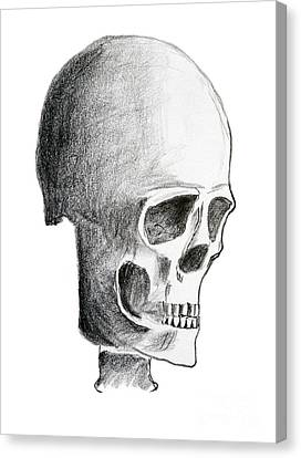 Hand Drawing Of The Skull - Pencil On Paper Canvas Print by Michal Boubin