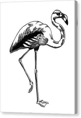 Hand Drawn Line Drawing Of Flamingo Bird Canvas Print