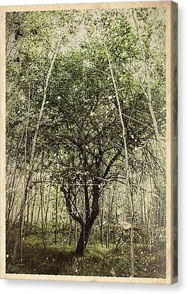 Hand Of God Apple Tree Poster Canvas Print