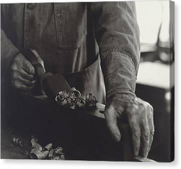 Hands Of Shaker Brother Ricardo Belden Canvas Print by Everett