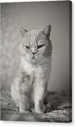 Canvas Print featuring the photograph Handsome Cat by Aiolos Greek Collections