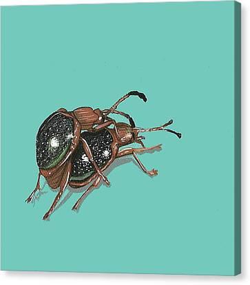 Handsome Fungus Beetles Canvas Print by Jude Labuszewski