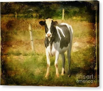 Handsome Holstein Canvas Print by Lois Bryan