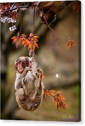 Canvas Print featuring the photograph Hang In There, Baby Redux by Rikk Flohr