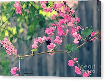 Canvas Print featuring the photograph Hang On by Megan Dirsa-DuBois