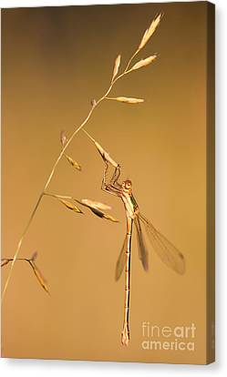 Hangin On  Canvas Print by Rikard Strand