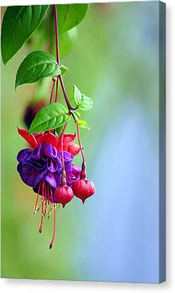 Hanging Gardens Fuschia Canvas Print by Laura Mountainspring