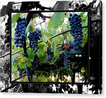 Hanging Grapes Canvas Print by Dorothy Berry-Lound