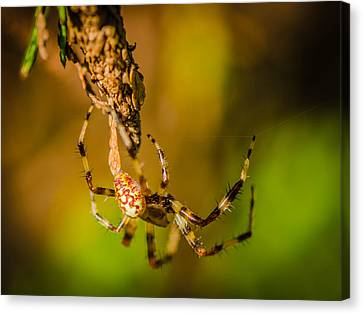 Hanging On A Thread Canvas Print by Bruce Pritchett