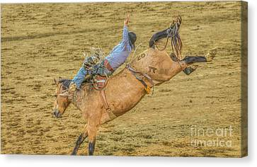Hanging On Rodeo Bronco Busting Canvas Print