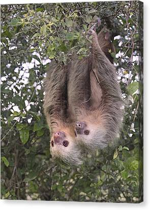 Tree Creature Canvas Print - Hanging Out by Betsy Knapp