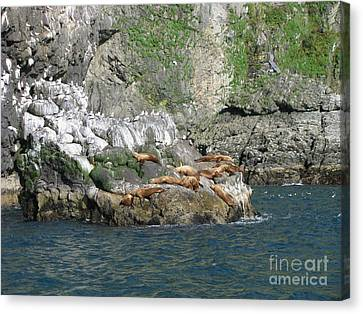 Hanging Out In Alaska Canvas Print