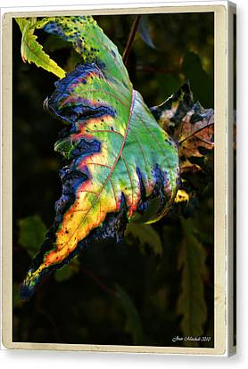 Canvas Print featuring the photograph Hanging Out by Joan  Minchak